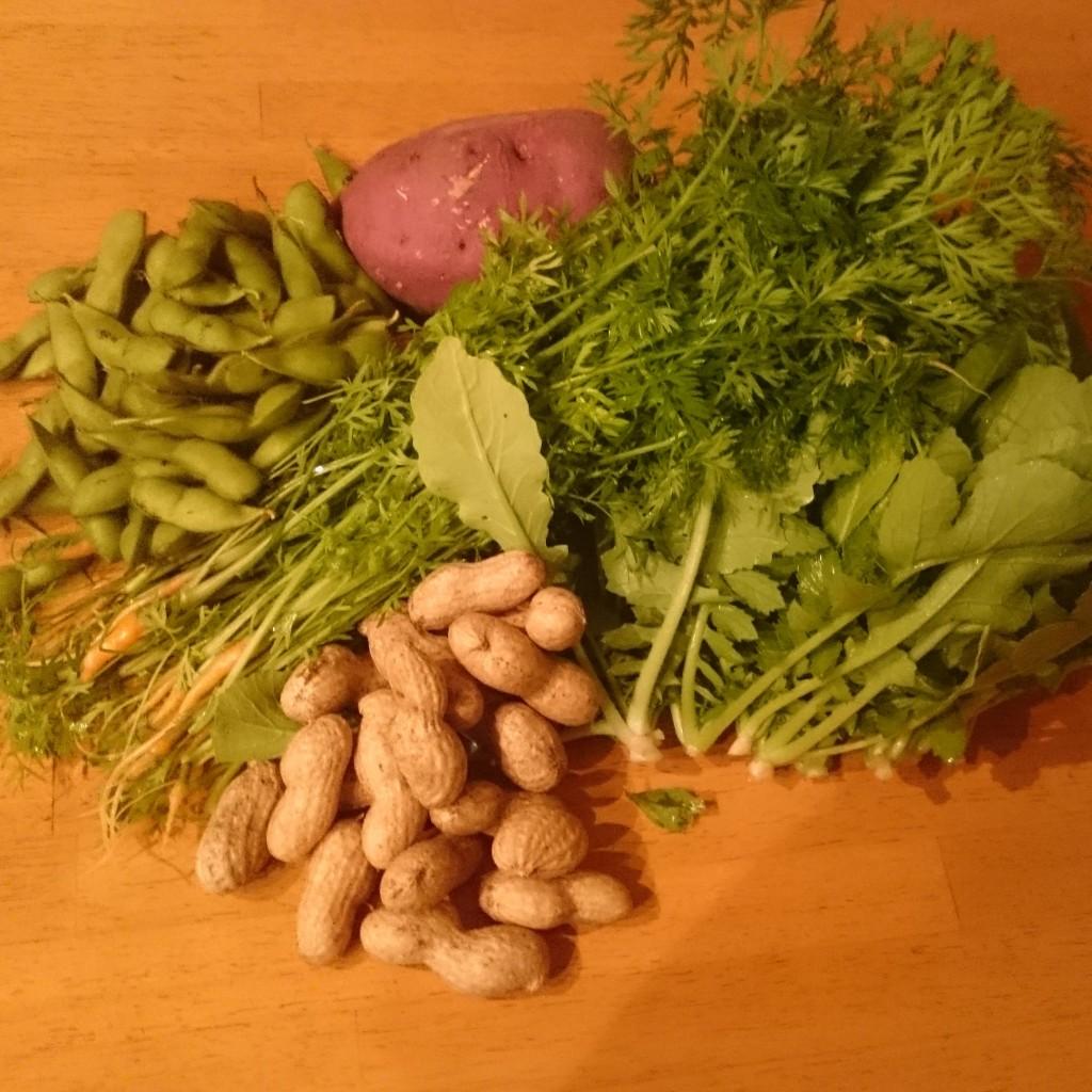 今週の新鮮お野菜 届きました