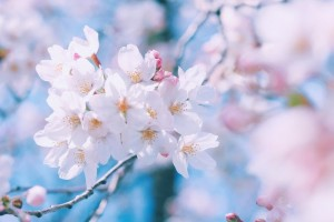 春はデトックスの季節